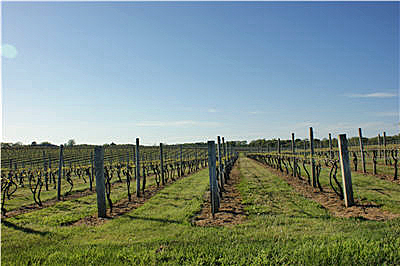 145-Wolffer-vineyard-400.jpg