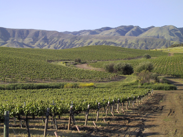 Baileyana's Paragon Vineyards