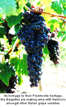 Bargetto produces a series of wines utilizing classic Italian grape varieties such as Nebbiolo