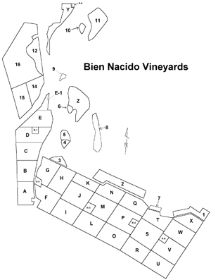 Map of vineyard blocks at Bien Nacido