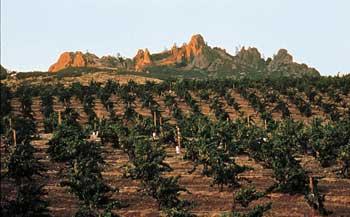 Chalone AVA vineyard