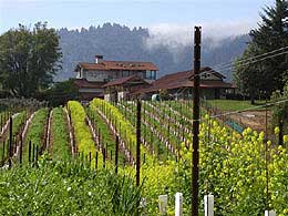 Cinnabar Winery vineyards