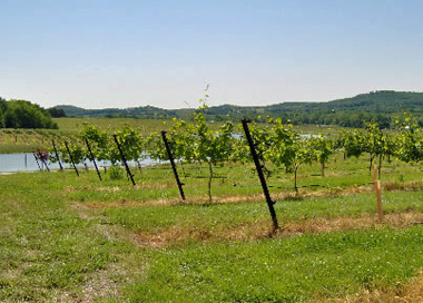 Crown-Valley-vineyard-380.jpg