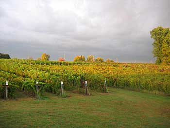 A Domaine Berrien Vineyard