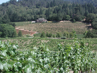 Diamond Creek vineyard volcanic hill.jpg