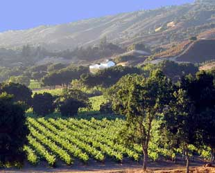 Galante Vineyards in Carmel Valley