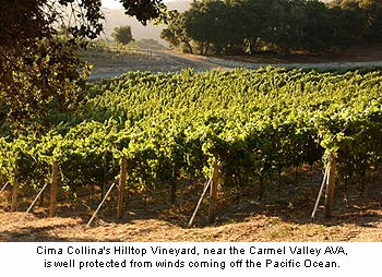 Cima Collina's Hilltop Vineyard is located near the Carmel AVA