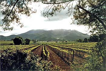 Another view of Lake County vineyards