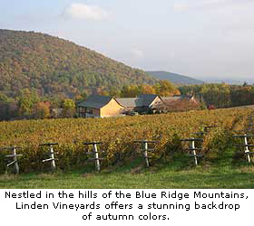 Virginia's Linden Vineyards in the Fall