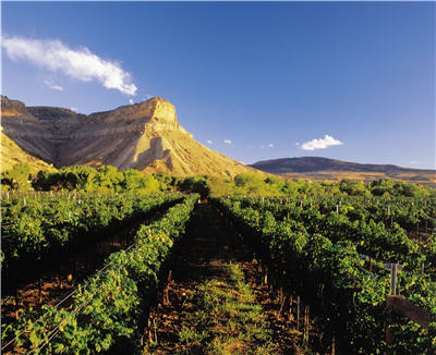 Mt. Garfield & vineyard.jpg