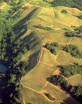 MtVeeder vineyards 269.jpg
