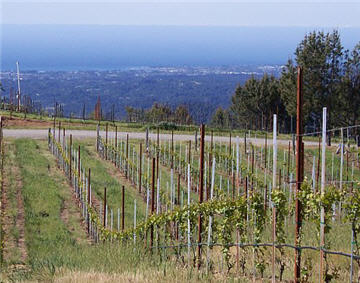 Muns Vineyard view 360.jpg