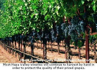 Napa Vintners are committed to hand harvesting