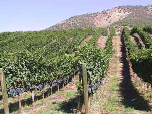 The varying terrain and climate in Oregon makes Zinfandel hard to grow.