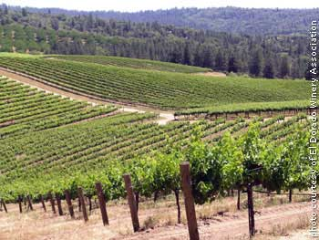 Perry Creek's vineyards