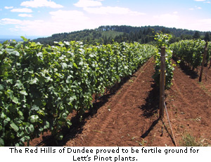 The Red Hills of Dundee proved to be fertile ground for Lett's Pinot plants.