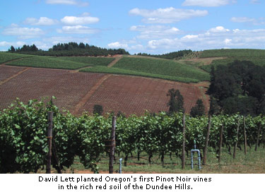 David Lett planted Oregon's first Pinot Noir vines