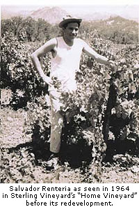 Salvador Renteria began working at Sterling Vineyards in the early 1960s