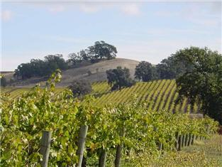 Suisun Valley vineyard