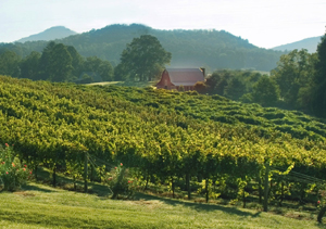 Tiger-Mt.-Vineyard-w-Barn-300.jpg