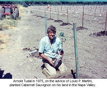 Arnold Tudal planting Cabernet Sauvignon in 1975