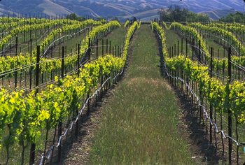 Wente_Vineyards_330.jpg