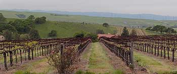 White Crane's vineyards