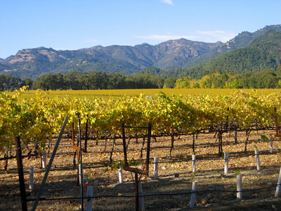Calistoga vineyard looking north