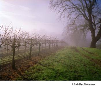 iron-horse-fog-350.jpg