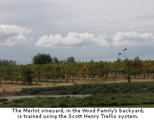 The Merlot vineyard in Rhonda's back yard is trained with the Scott Henry Trellis system.