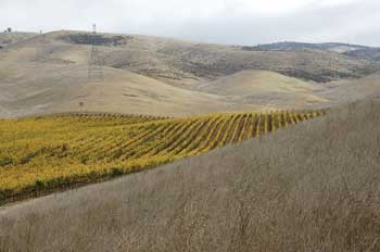 Part of Estancia's Pinnacle Ranch vineyards