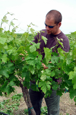 Rob_Chowanietz in_vineyard_250.jpg