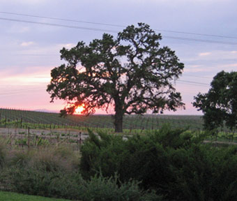 Sunset at Bianchi Winery
