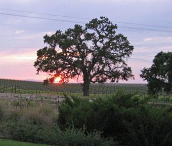 Sunset at Bianchi Winery