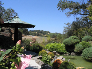 vineyard-view-from-pagoda-3.jpg