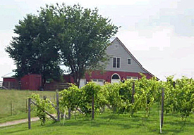 westphalia-vineyards-275.jpg