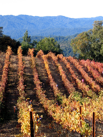The Gist Ranch owned by Thomas Fogarty Winery, and from which their Cabernet Sauvignon is sourced, reveals the fall colors and terrain typical of the AVA.