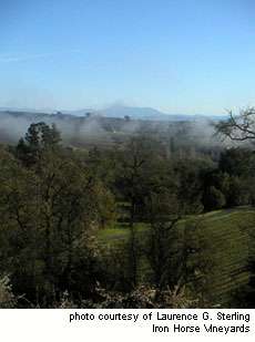 Persistent fog maintains the cool conditions of the Green Valley appellation