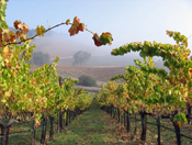 Visit Our Wine Store to Buy Wine Online - Appellation America