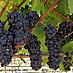 Pinot Noir's Regional Pedigree