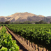 Zaca Mesa Winery and Vineyards