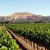 Zaca Mesa Winery and Vineyards