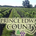 Prince Edward County Wineries Achieve Finesse and Flavor with Low Alcohol Wines