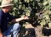 Old vines define Mokelumne River-Lodi AVA