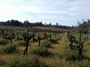 Howell Mountain Vineyards - Old Vines, Mountain Wines