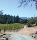 Arns Winery and Vineyards