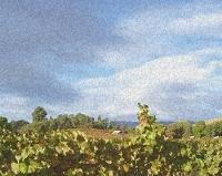 King Andrews Vineyards