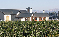 San Saba Vineyards