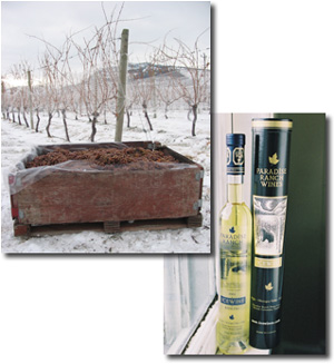 Paradise Ranch Wines - British Columbia icewine
