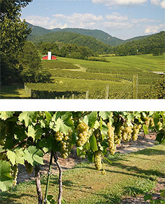 Persimmon Creek Vineyards